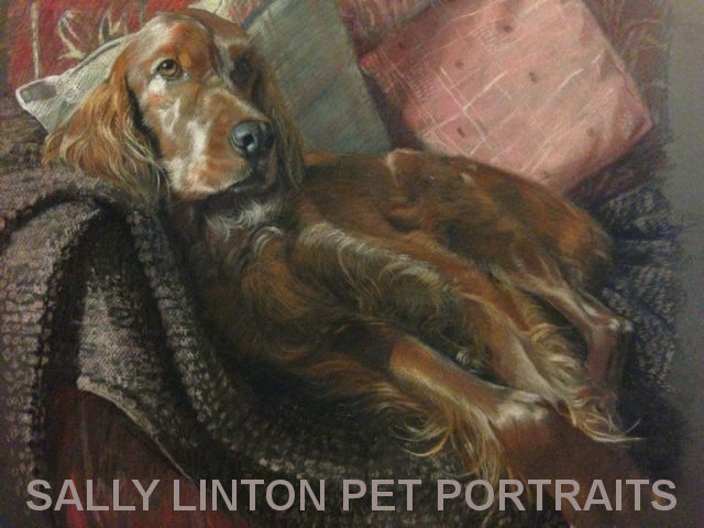 image of a pet portrait by sally linton